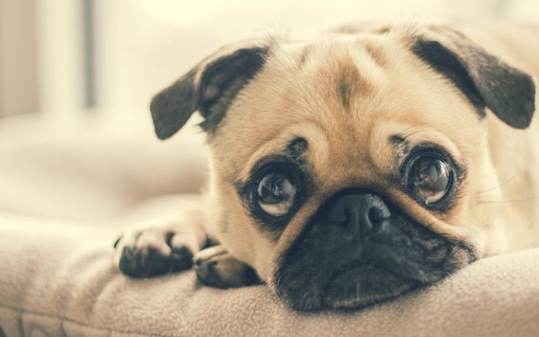 Pet Food Recall Alert