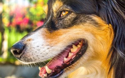 Why Does My Pet Have Bad Breath?