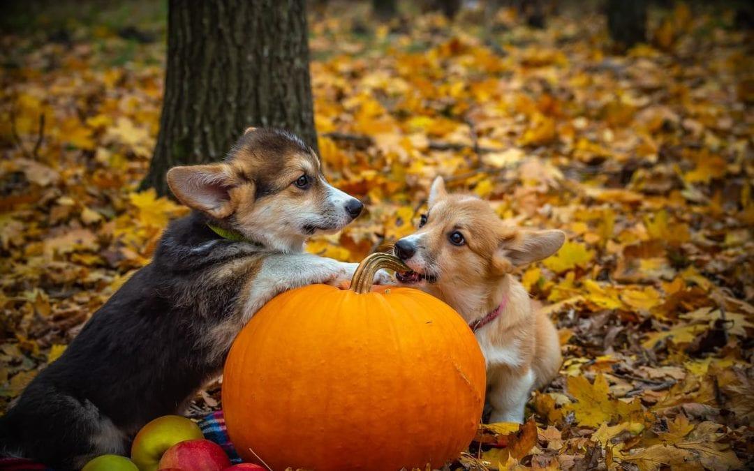 Halloween Pet Health Tips