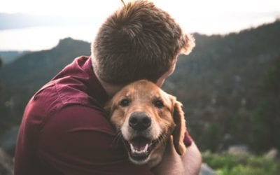 Missing Pet? Ways to Ensure a Happy Reunion